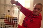 Community rescues exotic Golden Pheasant